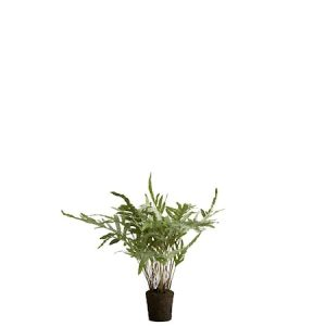 Flora rabbit's foot fern H89 cm