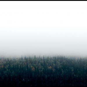 Forests in fog Plakat